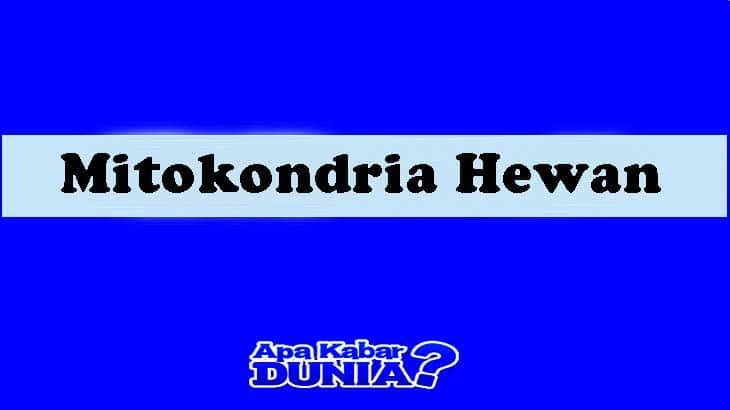Mitokondria Hewan